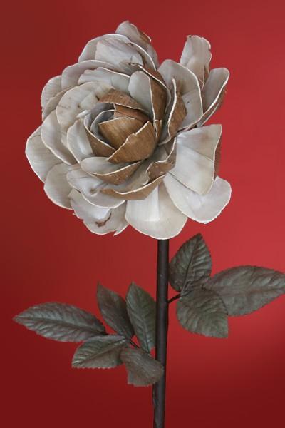 Rose braun