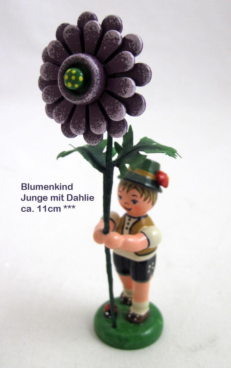Blumenkind Junge - Dahlie 11 cm Neuheit 2019
