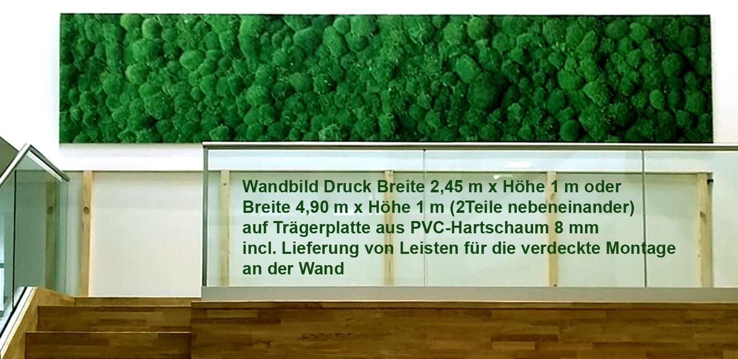 Wandbild Kugelmoos 2,45x1,0 m (BxH) gedruckt