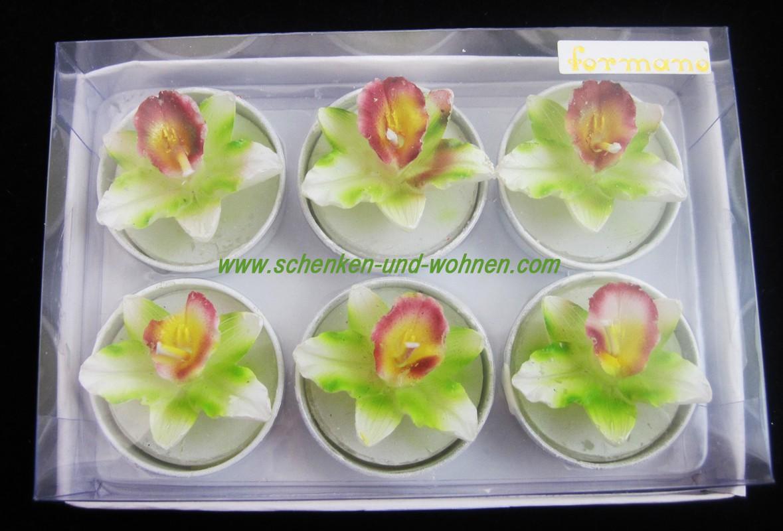 """Teelichter  """"Orchidee"""" 6er Packung, weiß-grün ca. 4 cm, sortiert"""