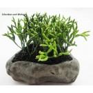 Kaktus-Kunstblume im Steintopf ca. 15 cm