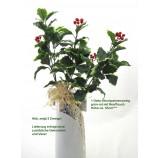 1 Deko-Zweig Stechpalme grün-rot, Länge ca. 55 cm